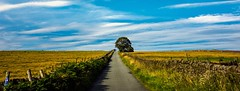 The road to somewhere (Phil-Gregory) Tags: road nikon d7200 sigma18250macro tree sky blue green peakdistrict national nature nationalpark naturalphotography naturalworld naturephotography countryside ngc scenicsnotjustlandscapes