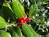 Rote Beeren (Laterna Magica Bavariae) Tags: mittenwald bayern deutschland de rote beeren suchspiel