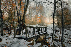 Autumn winter (dim.pagiantzas | photography) Tags: bridge wood wooden trees winter autumn seasons snow snowy leafs stones rocks horizon afternoon sunset nature natural landscape fog foggy sky clouds cloudy field greece macedonia olympos tree forest park