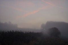 Foggy morning (Uli He - Fotofee) Tags: ulrike ulrikehe uli ulihe ulrikehergert hergert nikon nikond90 fotofee plätzer burghaun nebel morgen morgenlicht