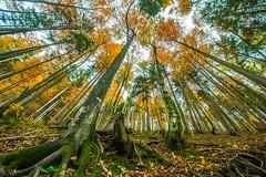 Pendling Forest (Vladi Stoimenov) Tags: austriaösterreich landscape pendling countryside excursion forest tour wood autumn