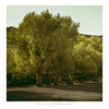 Holly Oak (AmBasteir) Tags: oak tree landscape morocco nature atlasmountains travel reise africa afrika marokko sigma sigmaart