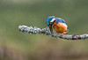 untitled-3 (graemecave) Tags: kingfisher canon canon5dmk111 bird birds fish colours canontest 100400l leeds yorkshire england blue exposure green mk111 uk portrait river water exposur zz