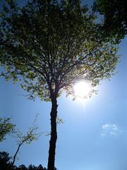 Sol árbol (sablott) Tags: spain galicia iberia europe ribierasacra rural backlight sun thesun sky ribeirasacra lugo osaviñao nature