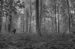Stomping through shrubbery (gavin.mccrory) Tags: forest nature nikon camera photo trees brussels belgium europe d5100 35mm 105mm dslr photography outside green shrubs plants forests light sunshine reflection rays woodlands trail wood tree park grass