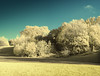 Mountsfield Park (blackwoodse6) Tags: nikon park catford se6 trees blue yellow 590nm panorama london southlondon southeastlondon mountsfieldpark londonparks falsecolour ir infrared goldieinfrared nikond50 bluesky