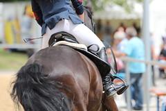 _MG_6121 (dreiwn) Tags: ridingarena reitturnier reiten reitplatz reitverein reitsport ridingclub equestrian showjumping springreiten horse horseback horseriding horseshow pferdesport pferd pony pferde tamronsp70200f28divcusd