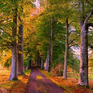 Autumn Road ~ Explored