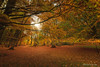 Nel bosco incantato . In the enchanted woods. (antoninao) Tags: boscosantantonio2017 abruzzo allaperto autunno autumn bosco sottobosco foglie atmosfera canon 5dmarkiii giallo green rami natura rosso red sole trees verde vi p escocostanzo laquila pescocostanzo