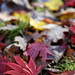 """Westonbirt Arboretum • <a style=""""font-size:0.8em;"""" href=""""http://www.flickr.com/photos/84132664@N06/38134623092/"""" target=""""_blank"""">View on Flickr</a>"""