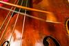 motion blur!-2 (grahamrobb888) Tags: d800 nikon nikond800 sigma sigma20mmf18 scotland doublebass kontrabass bullfiddle bowanoun music performing practice practise shiny wood dayjob work