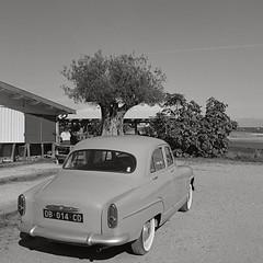 Frankreich, Austerndorf (jarie60) Tags: hasselblad 6x6 503cx fuji neopan sw schwarzweis epson v800 analog