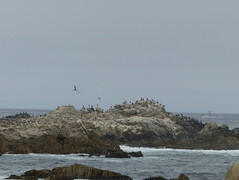 20160817 Californie Pacific Grove - (117) (anhndee) Tags: usa californie california pacificgrove