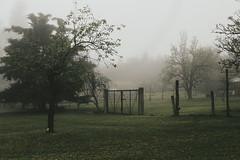 (lejardindevenus) Tags: fog foggylandscape farm méxico zacatlán
