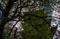 Green Curtain At The End Of Summer (snakecats) Tags: 京都市 京都府 日本 jp 東寺 toji 神社仏閣 仏閣 寺 京都 kyoto buddhisttemple temple 五重塔 fivestoreypagoda green 緑 スクリーン screen