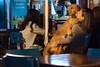 Love! (phardon) Tags: love dog animal people bozcaada turkey