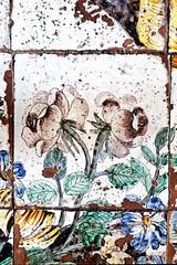 Ave rosa sine spinis (S. Hemiolia) Tags: santamariavisitapoveri ischia zeiss pavimento piastrelle ceramica maiolica manualfocus 6d forio contax yashica wabisabi
