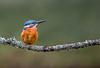 untitled-2 (graemecave) Tags: kingfisher canon canon5dmk111 bird birds fish colours canontest 100400l leeds yorkshire england blue exposure green mk111 uk portrait river water exposur zz