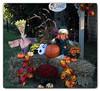 Halloween neighbors (Ste_✪) Tags: eos760d ottobre2016 otoño autumn autunno canada canadá saintadolphedhoward quebec pumpkins maple arce acero giardino