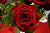 Bloody Queen (CesareZucco) Tags: red rose flower flowers nature corolla fiore petals petali leafs foglie natura vaso white verde bianco light serra beauty elegance passion luce essence love bloody perfect nikon rosa colours