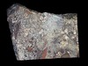 Silver in Breccia (Ron Wolf) Tags: earthscience geology mineralogy silver crystal dendritic isometric metal mineral nativeelement nature preciousmetal spinellaw twin portradiumdistrict northwestterritories canada