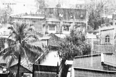 Last Rain - Tribute to Vincent Van Gogh (NIRA BANERJEE) Tags: rain raindrops canvas rainy trees landscape afternoon painting impressionism impressionist art india kolkata monochrom monochrome nature tree sky canon 1855 7dwf city bw new blackandwhite