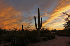 Sunset Colors (craigsanders429) Tags: cactus saguarocactus sunsetphotography sunsets sunset sunsetcolors arizona tucsonarizona sky cloudsandsky clouds