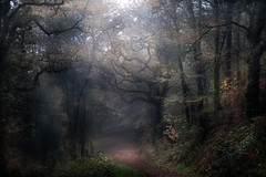 Sur les terres de légendes... (Isabelle Aurore) Tags: bretagne brittany finistère france forest forêt bois brume automne arbre trees landscape paysage mist
