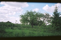 Apple Trees (ŽivilėZ) Tags: green summer home lithuania rural apple tree