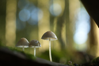 Trio of Mushrooms
