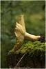 Toadstool (HP032366) (Hetwie) Tags: france bors auvergne hauteloire autumn frankrijk herfst nature toadstool lafougeraie paddestoel natuur bblafougeraie malvieres hautloire fr