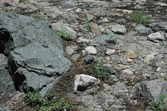 Volcanic debris flow deposit (upper Holocene, May 1915; Devastated Area, Lassen Volcano National Park, California, USA) 14 (James St. John) Tags: devastated area volcanic debris flow deposit 1915 mt lassen peak volcano national park california cascade range