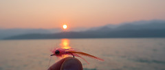 Irresistable (E. Hanson) Tags: flyfishing pacificnorthwest hoodcanal