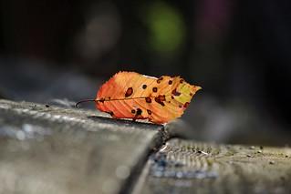 Autumn Detail's