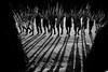Asurini do Xingu - Para (pguiraud) Tags: sergeguiraud zoé yawalapiti kayapo asurinidoxingu bororo awa brésil brasil brazil tribu tribe ethnie ethnic amazonie amazon amazone indio indien indian forêttropicale portrait artducorps labret ornementcorporel plateaulabial para indiensisolés indiosisolodos
