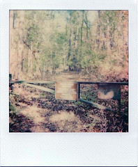 Patapsco (m.ashe7) Tags: onestep2 polaroid polaroidoriginals itype park woods outdoors trees instantfilm maryland lofi