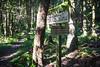 Junction (johnwporter) Tags: hiking scramble climbing cascades mountains stateforest issaquahalps tigermountain 徒步 爬行 攀登 喀斯喀特山脈 山 州立森林 伊薩闊阿爾卑斯 虎山