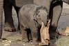 YUNHA (K.Verhulst) Tags: yunha asiaticelephants aziatischeolifant olifanten elephants dierenparkamersfoort amersfoort elephant coth5 sunrays5 ngc npc naturethroughthelens