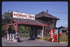World's Largest Redwood Tree Service Station (1936), angle, Route 101, Ukiah, California (LOC)