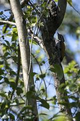 DSC_5440 (Almixnuts) Tags: kualaselangor nature naturepark kualaselangornaturepark