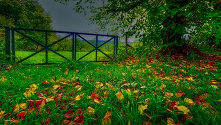 Fences - 3973