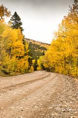 Fall colors on Boreas Pass