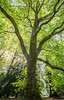 IMG_2978-HDR.jpg (tybach) Tags: canon750d arboretum westonbirt