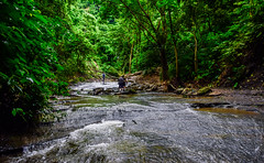 Mountain Defile (MashrikFaiyaz) Tags: forest tree plants green water waterfall stream mountain hill hills mountains rock landscape river creek wood people scenery view natural beauty beautiful travel tourism trail chittagong bangladesh asia southasia exploration outdoor nikon d5300 daylight sunlight sunshine sunny autumn september flickrunitedaward lightroom