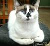 Katrina está triste porque se quedó sola, su hermanito Thrall  se fue a Peru... (MariaTere-7) Tags: gata katrina caracas venezuela mariatere7