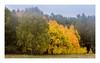 The yellow in the mist (Andreas Larzon Photography) Tags: gloom gloomy autumn barkarbystaden birch fog forrestlandscape framing green järfälla landscape landscapephotography lowclouds misty morning nikond200 orange ruleofthirds sigma24105mmf4dgoshsmart sweden tree woodlandphotography yellow