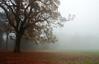 Autumnal Mist.. (Philip R Jones) Tags: autumnal fall autumn falling park inapark sliders hss hdr