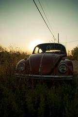 June Bug (Wєirdlig) Tags: bug vw car golden light sun colorado grass vibrant vehicle volkswagen