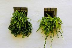 Blanco y verde (camus agp) Tags: ventanas rejas plantas verde blanco