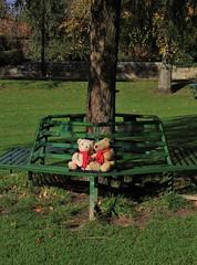 Two little bears taking the sun (Martellotower) Tags: boris marmaduke bears bench sun great ayton low green willow tree